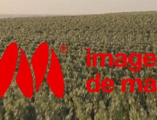 RUINART PELA LENTE DO PROGRAMA IMAGENS DE MARCA